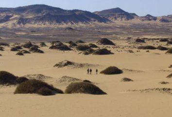 plantes du désert peu commun: Calligonum. Description, utilisation
