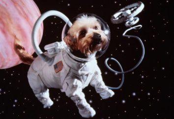 Il primo animale nello spazio. Belka e Strelka – cani astronauti