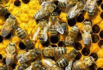 Parlez de la façon dont les abeilles se préparent pour l'hiver