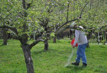 Primavera concimazione alberi da frutto. Come rendere condimento per gli alberi da frutto