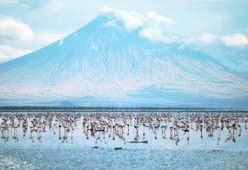 Jezioro Natron – ulubione miejsce dla flamingów