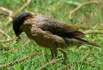O que é o mais útil para o jardim um pássaro? As aves em nossos jardins