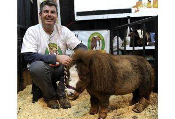 Quel est le plus petit cheval dans le monde? Race la plus petite des chevaux photo