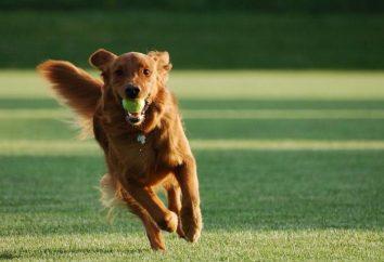 Correction du comportement du chien: méthodes de dressage de chiens