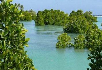 Le mangrovie – una creazione unica della natura