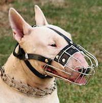 Maulkorb für Hunde – das richtige Zubehör für gestörte Tiere