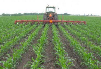 Uprawa – głównym sposobem uprawy w rolnictwie