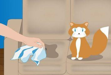 Porady właściciele zwierząt domowych: jak usunąć zapach moczu kota?