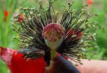 Estambres y pistilos de una flor