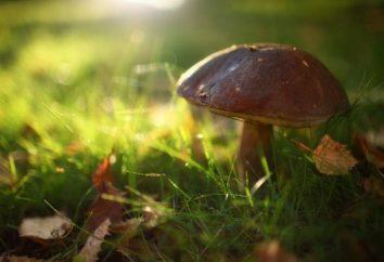 Co ma książka marzenie: zbierać grzyby – to ma sens?