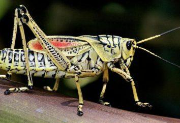 Owady z niepełną metamorfozy są niektóre owady?
