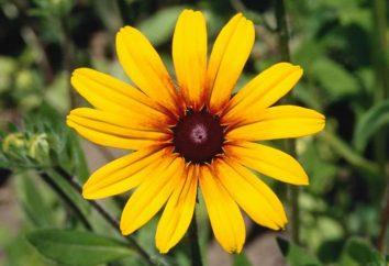 Quelles plantes s'appellent plus haut? Exemples, signes et caractéristiques des plantes supérieures