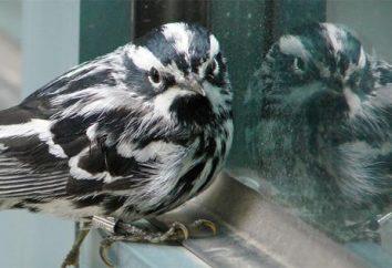 Por que lutar janela pássaro da casa?