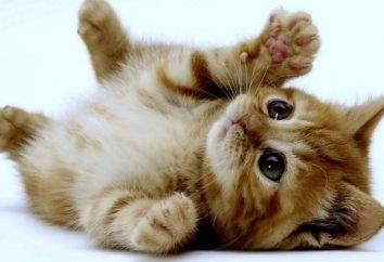 Interpretacja snów: aby zobaczyć kociaka we śnie – co?