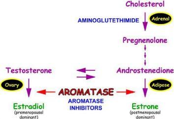 Aromatase-Inhibitoren: Bewertungen, Preise. Aromatasehemmer im Bodybuilding