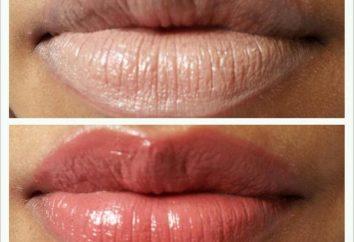 Lip Primer: Producto, cuenta con marcas populares