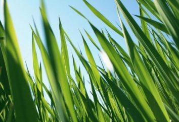 Qu'est-ce que l'herbe est la plus haute du monde?