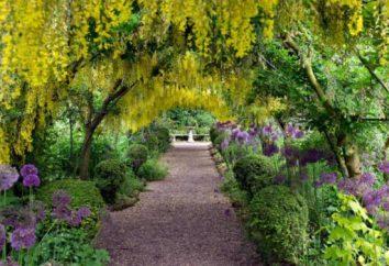 Gli studi mostrano: un bel giardino può salvare la tua vita