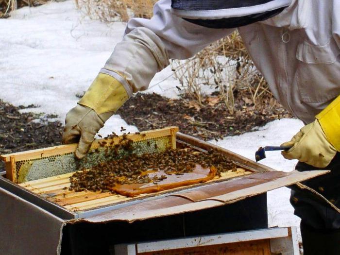 top dressing der bienen im februar wie die bienen im winter und fr hjahr f ttern beratung. Black Bedroom Furniture Sets. Home Design Ideas