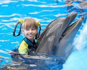Onde você pode nadar com golfinhos em Moscou?