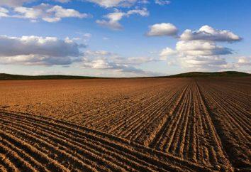 Płodność – co to jest? Co to jest żyzność gleby?