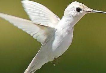 La adaptación al vuelo de las aves: signos. Cómo las aves se han adaptado a la fuga
