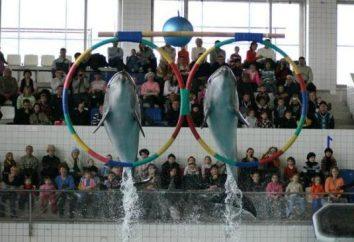Delphinarium in Naberezhnye Chelny – viel Spaß und positive
