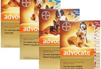Gouttes « avocat » pour les chiens: mode d'emploi et commentaires
