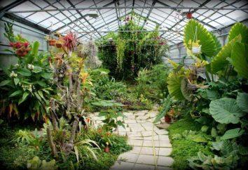 Orto Botanico, Volgograd: indirizzi. Arboretum a Volgograd