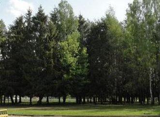 """Mohylew sanatorium """"Sosna"""": zdjęcia i opinie"""