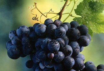 Rochefort – uva da tavola. Descrizione, propagazione per talea