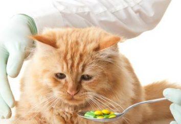 Przeciwrobacze dla kotów i kociąt – dobór i zastosowanie