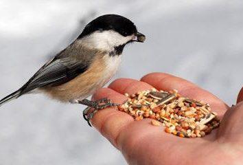 O que para alimentar os pássaros no inverno. O que para alimentar pássaros na rua do inverno