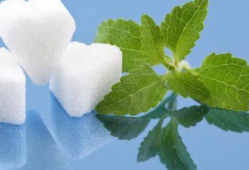 Stewia do utraty wagi – idealnym substytutem cukru, aby pomóc słodycze