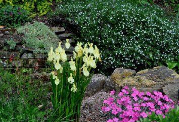 Quoi de mieux pour planter des fleurs alpines