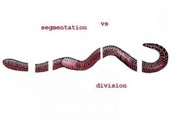 L'ordine delle parole e la divisione effettiva della frase. La divisione effettiva della frase in lingua inglese