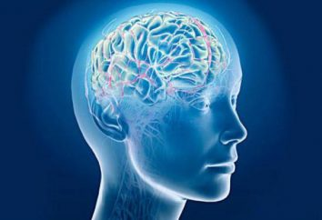 Seni della dura madre (seni venosi cerebrali, seni paranasali): anatomia, funzioni