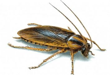 Widząc karalucha w śnie – co to jest?
