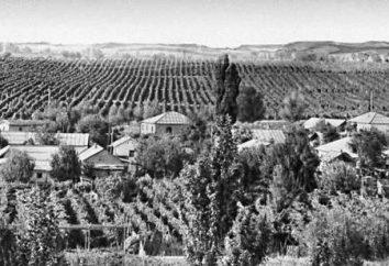 Types de propriétés URSS dans le domaine de l'agriculture, ou ce qui distingue la ferme de la ferme