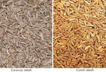 Cominho e sementes de cominho: qual é a diferença, o que propriedades úteis têm, quando aplicável.