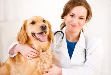 """clínica veterinaria en Tver: veterinarios """"Oh, cómo le duele"""""""
