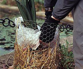 Come copertura per la clematide inverno: consigli da giardinieri esperti