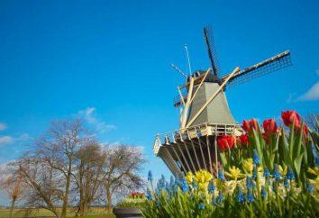 O país das tulipas – Países Baixos. O país das tulipas na Europa