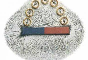 Qual è il campo magnetico e perché è negli esseri umani