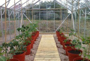 Die Landung von Tomaten in einem Gewächshaus: die Regeln und Funktionen