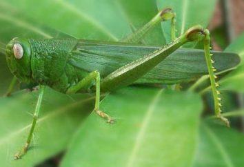Cavalletta verde. Ampliare la propria prospettiva
