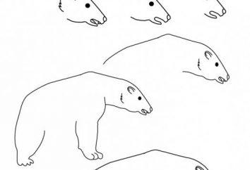 Jak narysować niedźwiedzia polarnego pięknego?