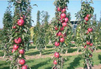 Apple tree Colon Triumph: descrizione, foto e recensioni