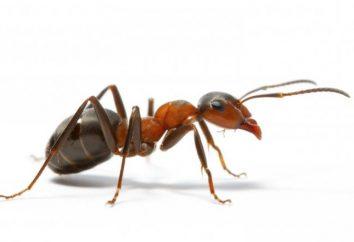 Interprétation des rêves: rêver à ce que une fourmi?