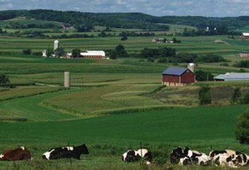 Midwest degli Stati Uniti: descrizione, l'industria, le risorse e le caratteristiche